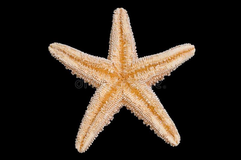 Parte inferior de las estrellas de mar