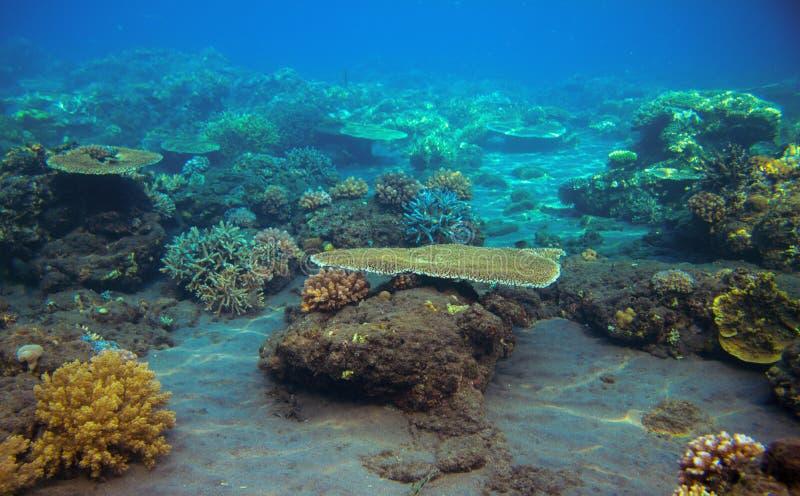 Parte inferior de mar com recife de corais Foto subaquática dos habitantes tropicais do litoral fotos de stock