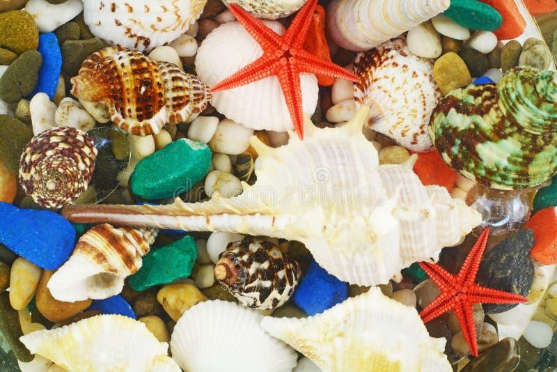 Parte inferior de mar con plantas de la alga marina y una concha de berberecho imagen de archivo libre de regalías