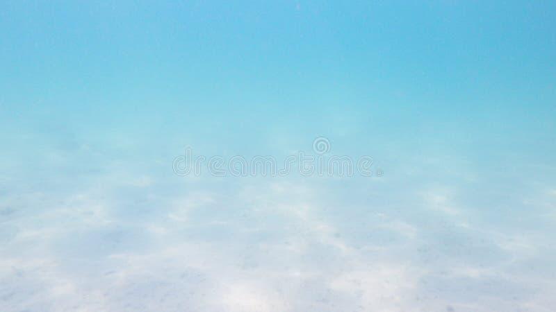 Parte inferior de mar con plantas de la alga marina y una concha de berberecho fotografía de archivo libre de regalías