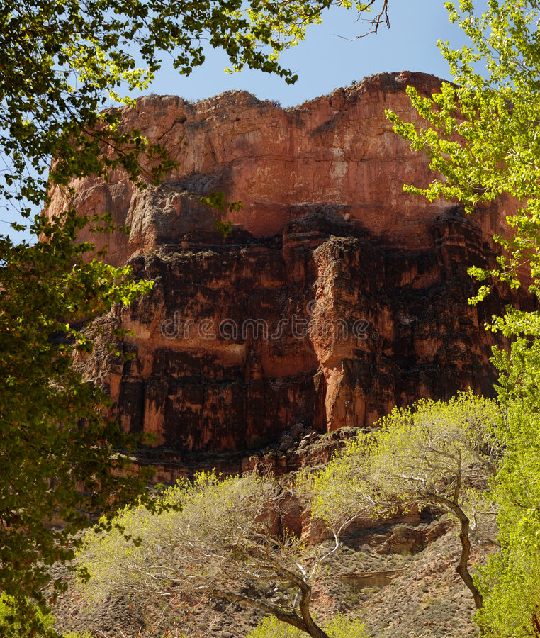 Parte inferiore della scena del grande canyon fotografia stock libera da diritti