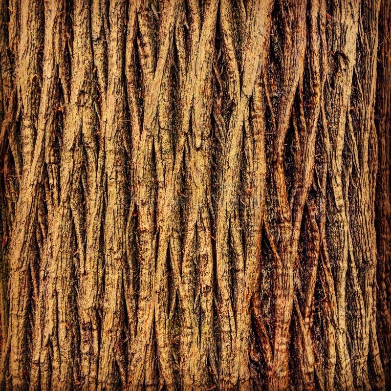 Parte posterior del pino de piedra foto de archivo libre de regalías