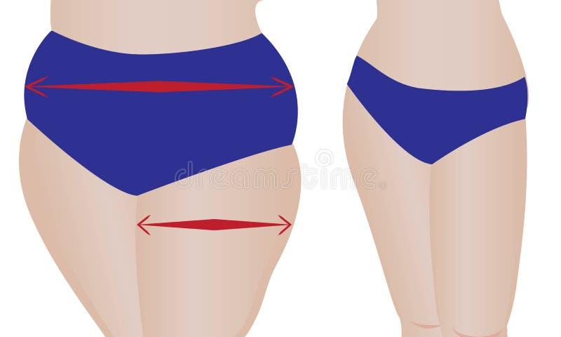 Parte posterior gorda y delgada del ` de las muchachas Vector ilustración del vector