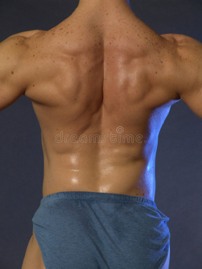 Parte posteriore del muscolo fotografia stock libera da diritti