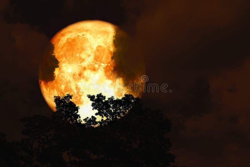 Parte posteriore della luna della razza pura sopra gli alberi della cima della siluetta ed il cielo variopinto fotografia stock libera da diritti