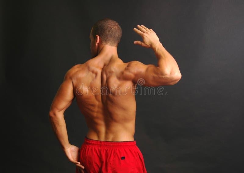 Parte posteriore muscolare del maschio negli shorts rossi fotografia stock