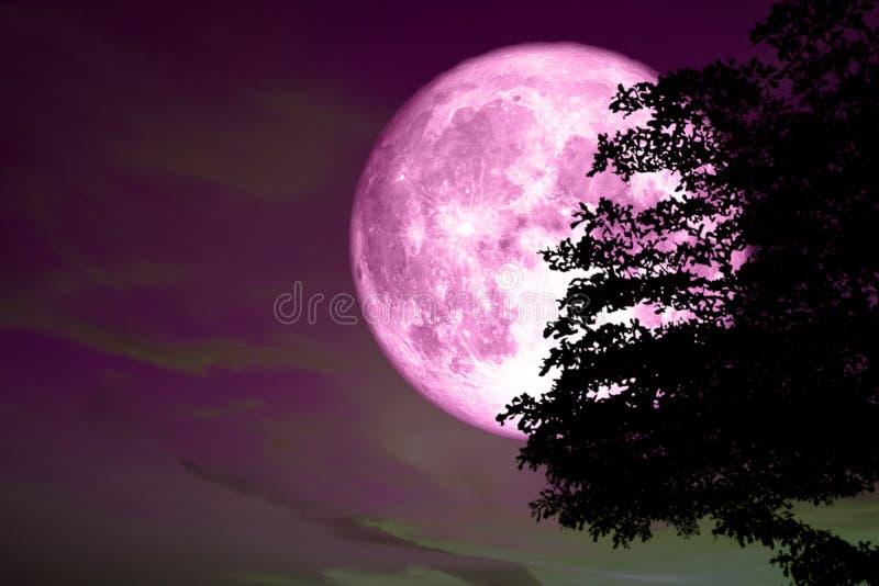 Parte posteriore rosa completa eccellente della luna sull'albero della siluetta nel colorf rosa scuro immagini stock