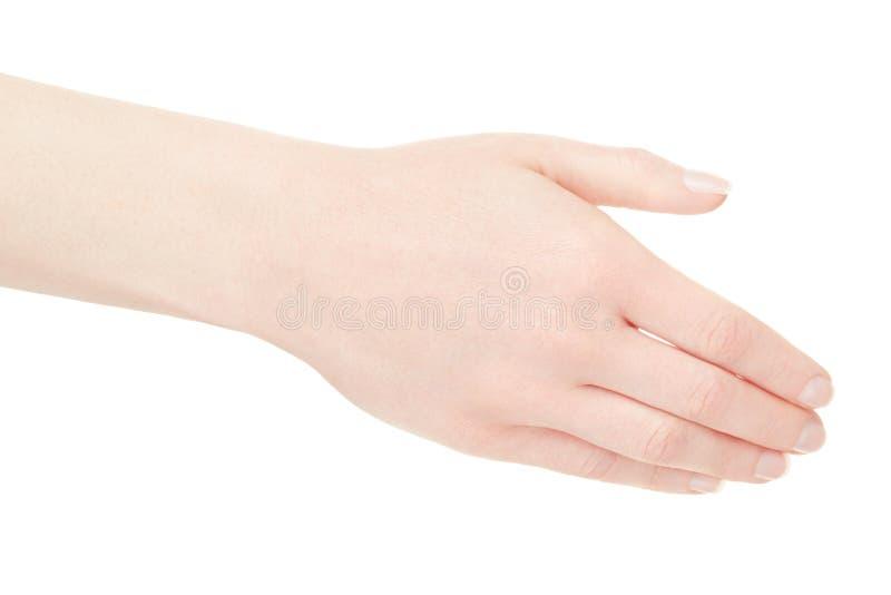 Parte posteriore vuota della mano della donna su bianco fotografia stock