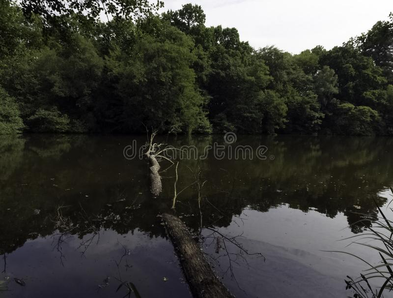 Parte salvaje del lago Shefield - Uckfield, Reino Unido imagen de archivo