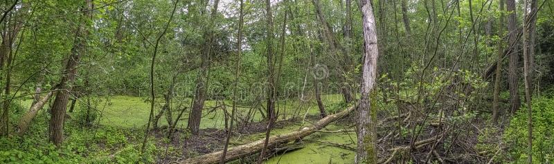 Parte salvaje del parque natural Parc Naturel du Patis de Patis en Meaux fotografía de archivo libre de regalías
