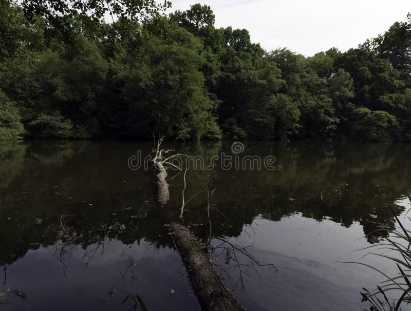 Parte selvaggia del lago Shefield - Uckfield, Regno Unito immagine stock