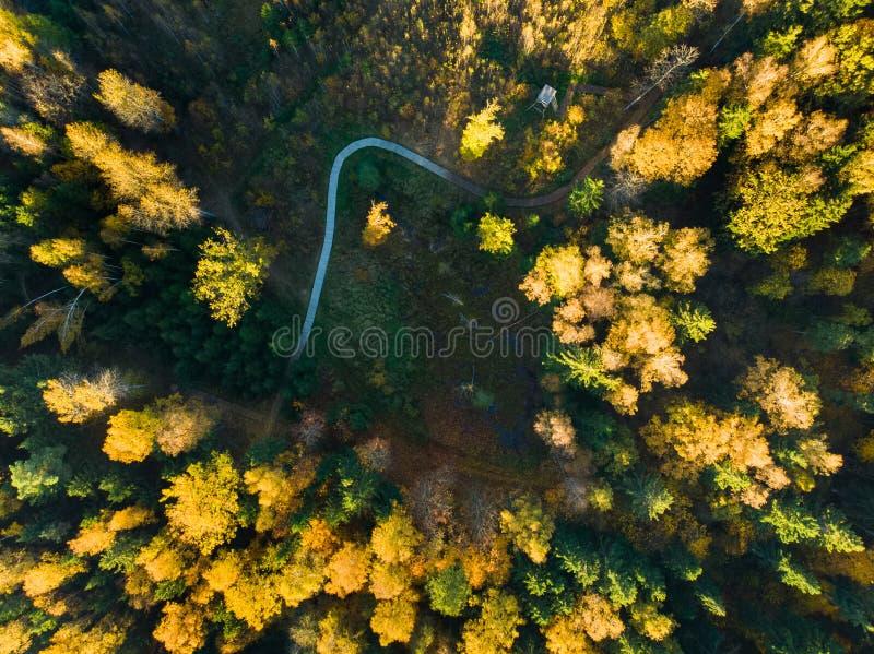 Parte superior aérea abaixo da vista da floresta do outono com o trajeto de madeira entre pinheiros fotografia de stock