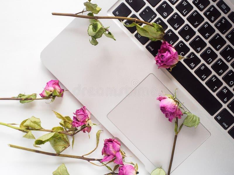 Parte superior branca, portátil, rosas imagens de stock