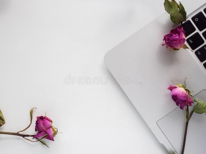 Parte superior branca, portátil, rosas foto de stock royalty free