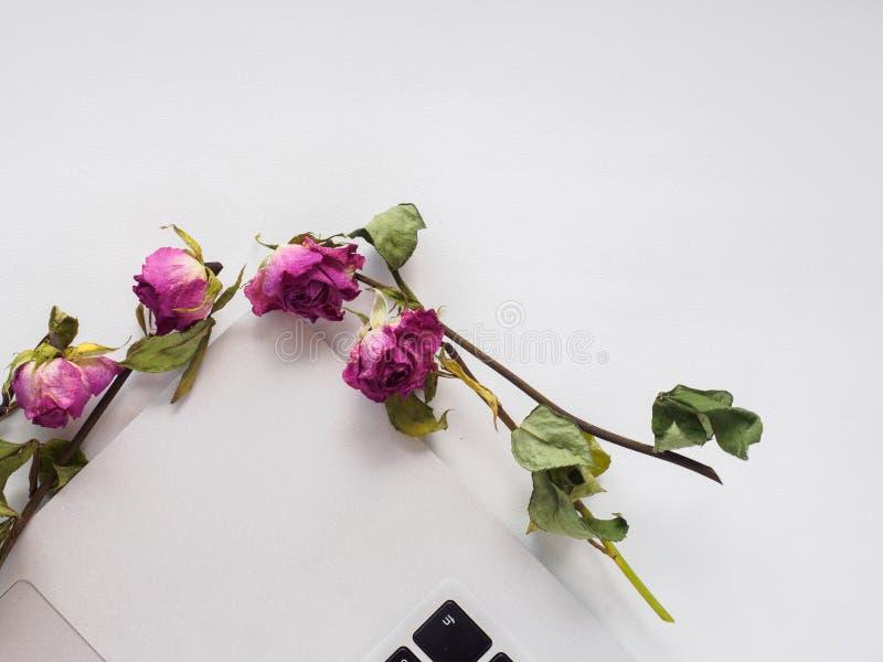 Parte superior branca, portátil, rosas foto de stock
