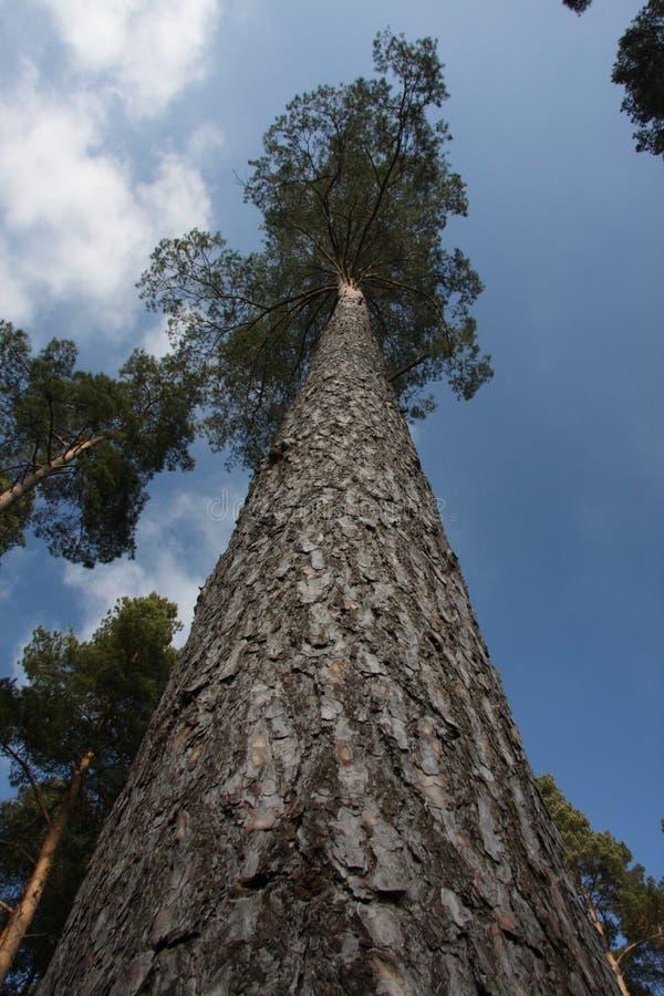 Parte superior da árvore fotografia de stock