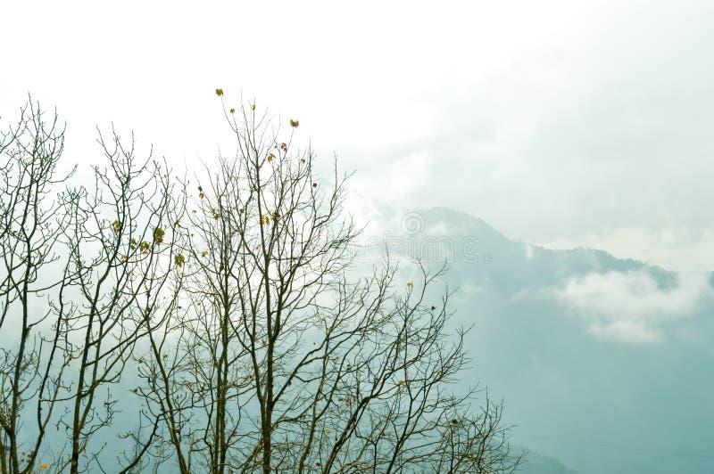 Parte superior da árvore no fundo coberto de neve e nevoento do inverno da montanha Escala Himalaia nebulosa e com sua reflexão o foto de stock royalty free