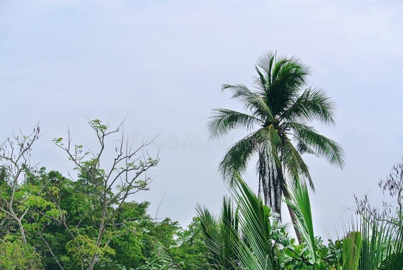 Parte superior da palmeira contra o c?u nebuloso azul imagens de stock royalty free