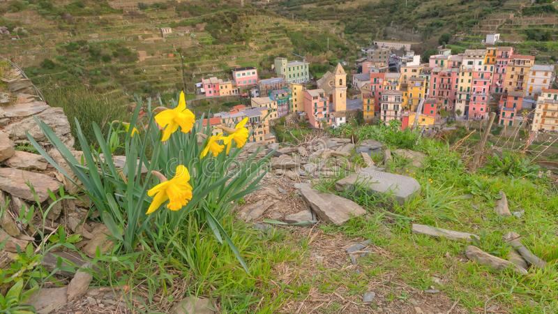 A parte superior de Manarola vista de cima de Manarola, 5 terre, Liguria, Itália imagem de stock