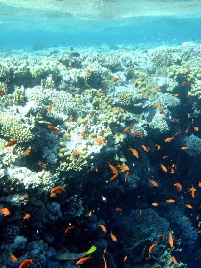 A parte superior de um recife imagem de stock royalty free