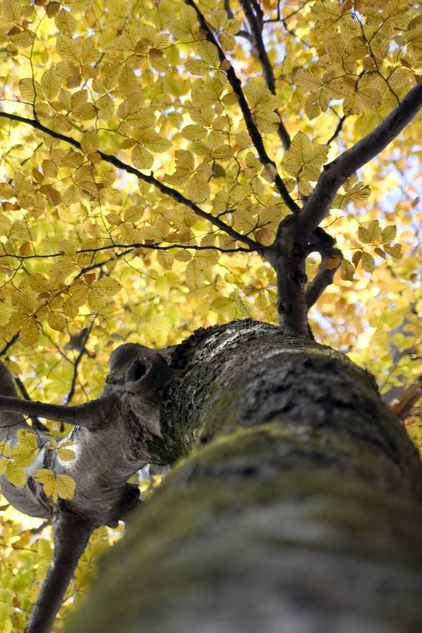 Parte superior de uma árvore imagens de stock
