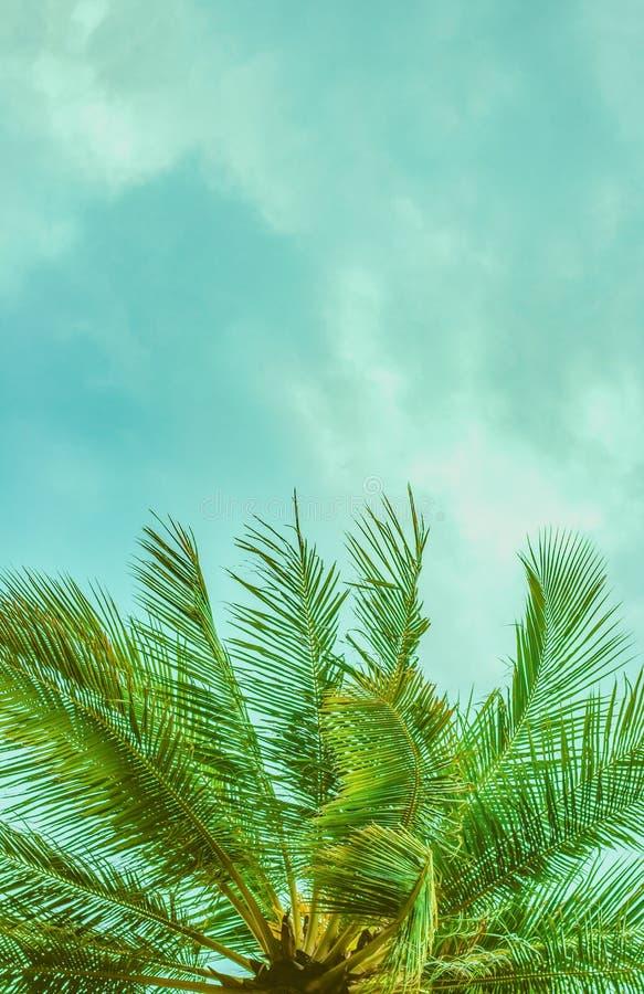 Parte superior de uma opinião inferior da palmeira imagens de stock royalty free