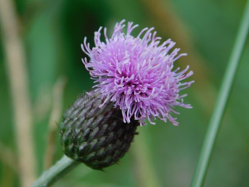 Parte superior pequena bonita da flor fotografia de stock royalty free