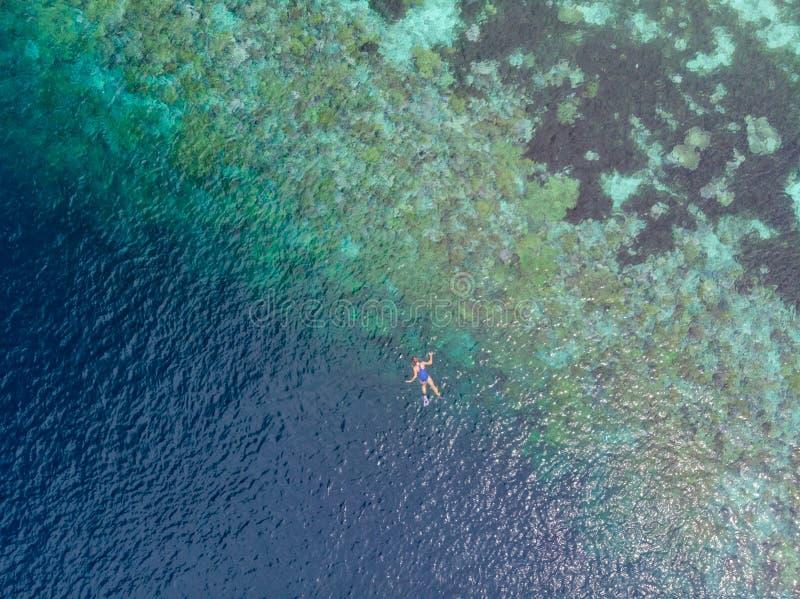 Parte superior a?rea abaixo dos povos que mergulham no mar das cara?bas tropical do recife de corais, ?gua azul de turquesa Arqui imagens de stock royalty free