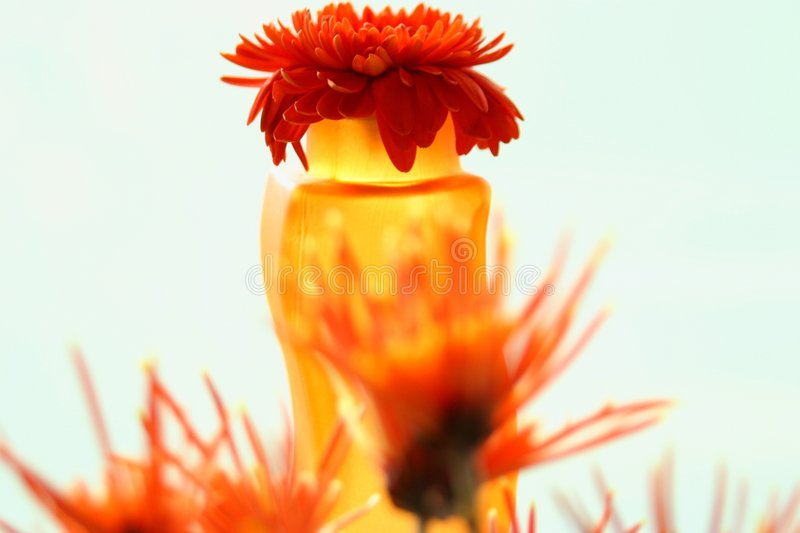 Download Parte Superiore Del Gerbera Immagine Stock - Immagine di ambientale, ambiance: 205453