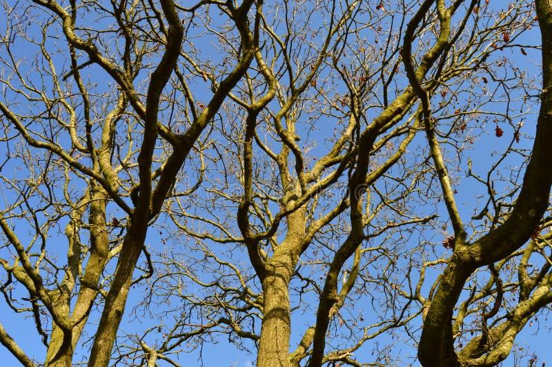 Parte superiore dell'albero immagini stock
