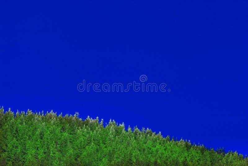 Parte superiore dell'albero con neve, cielo immagine stock
