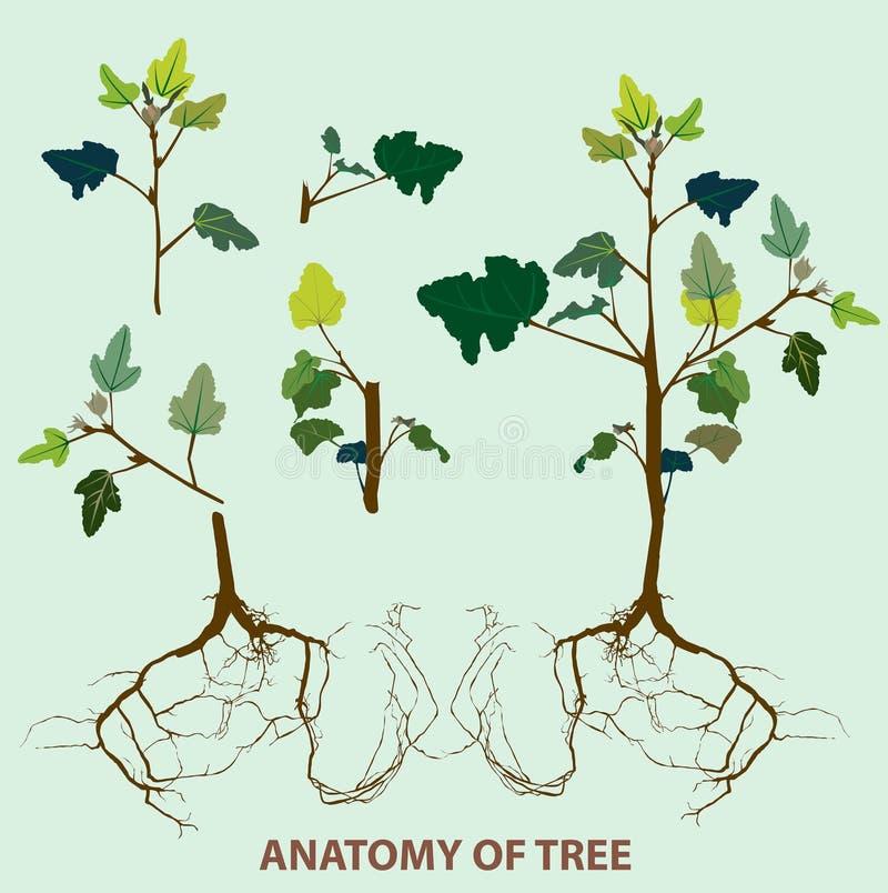 Parte superiore di anatomia dell'albero alla radice illustrazione di stock