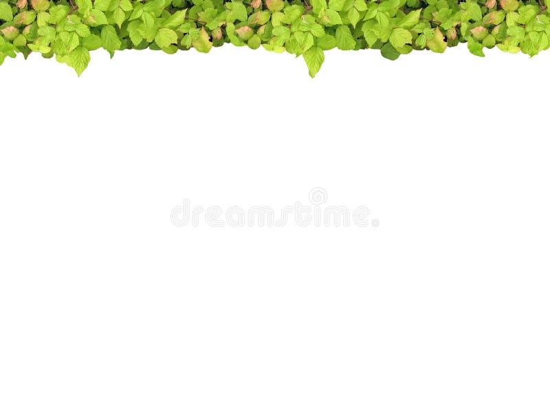 Parte superiore verde del blocco per grafici immagine stock