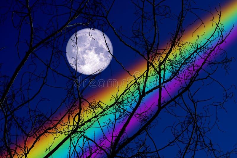 Parte traseira completa de Buck Moon na árvore seca do ramo da silhueta no céu noturno e no arco-íris foto de stock