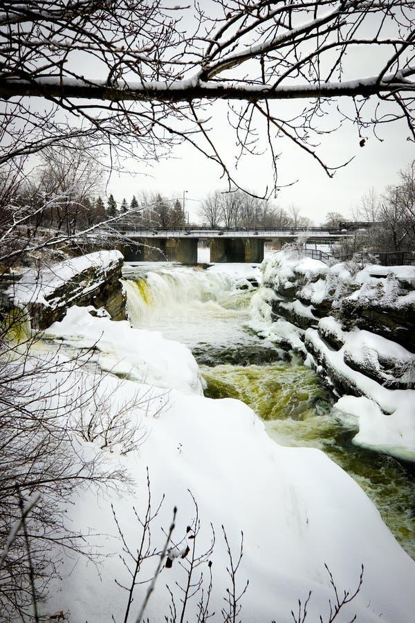 A parte traseira do porco cai em Ottawa, Canadá no inverno. imagem de stock royalty free