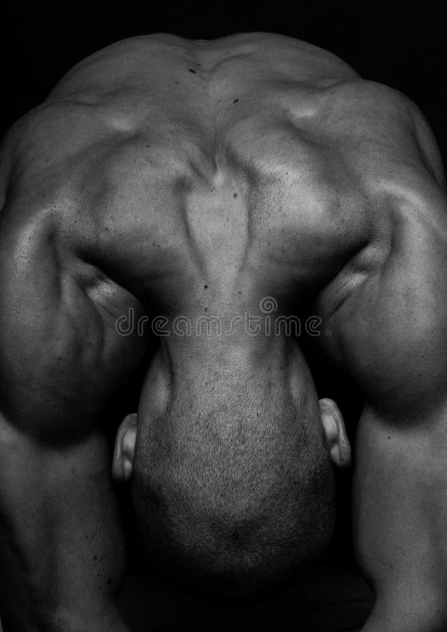 Parte traseira e ombros do macho imagem de stock