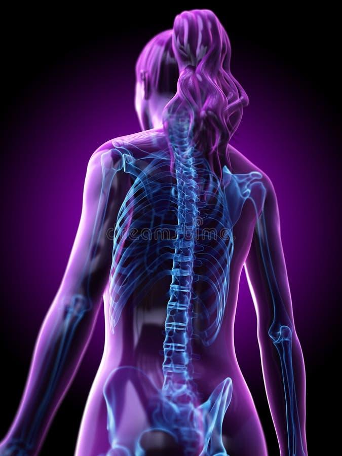A parte traseira esqueletal de uma mulher ilustração do vetor