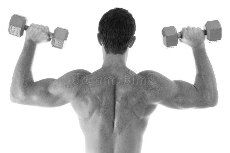 Parte traseira muscular fotos de stock royalty free