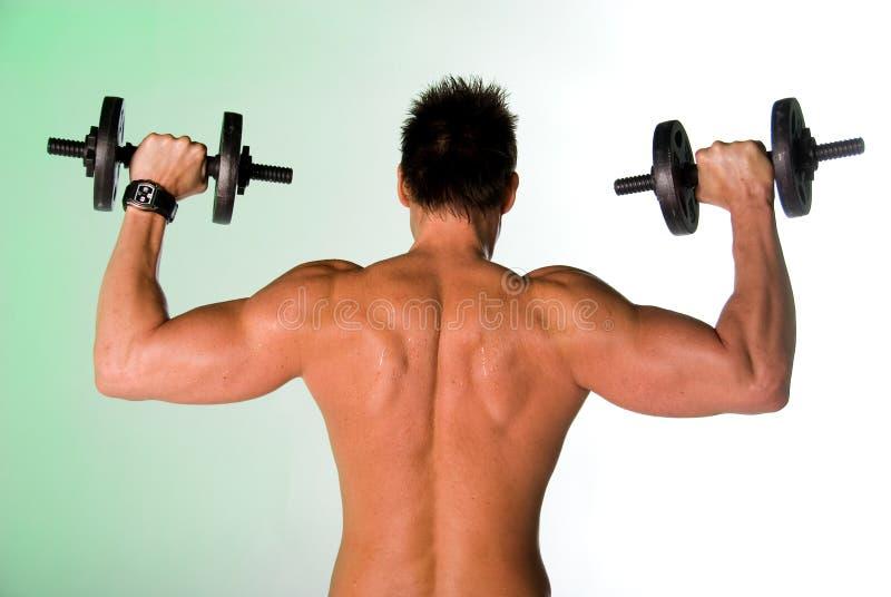 Parte traseira muscular. foto de stock