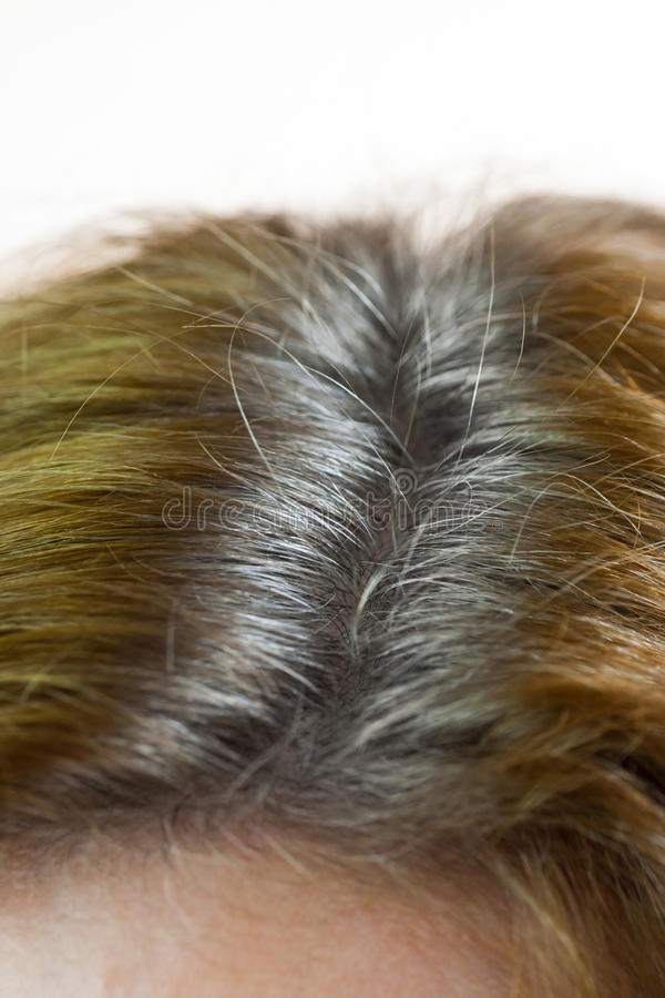 Parted gray hair. Grey hair in the partition stock photo