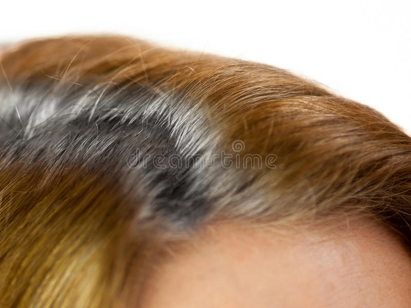 Parted gray hair. Grey hair in the partition royalty free stock photo