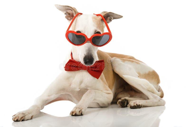 Parteihund lizenzfreie stockfotografie
