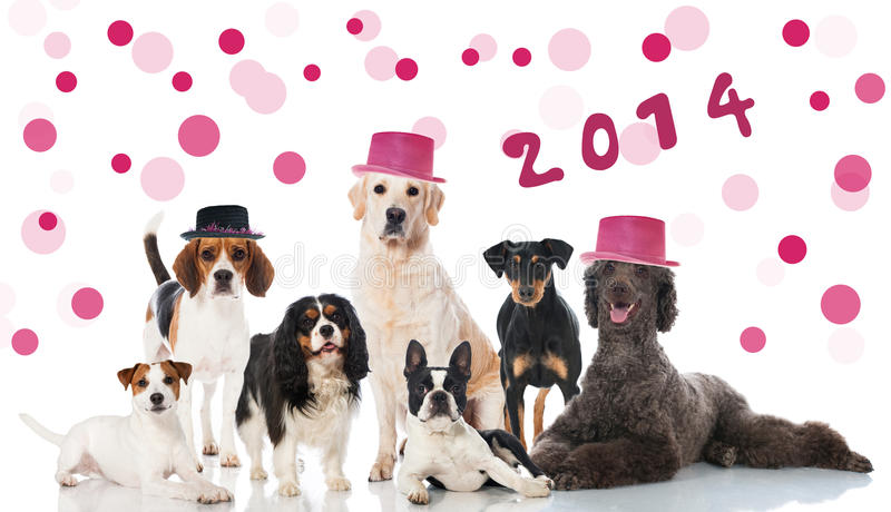 Parteihunde lizenzfreie stockbilder