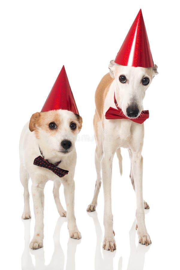 Parteihunde stockbilder