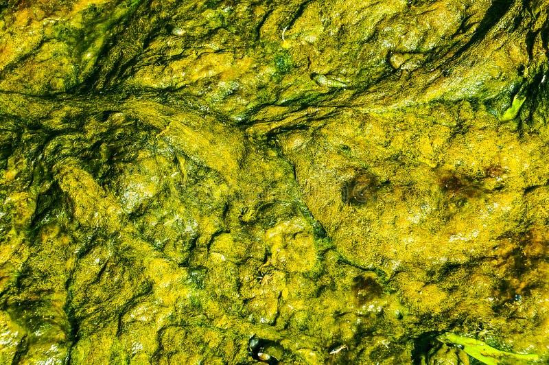 Partern de pedra imagem de stock