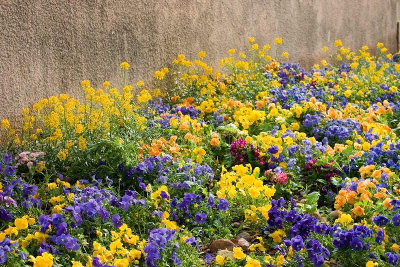 Download Parterre image stock. Image du modifié, ressort, jardin - 736181
