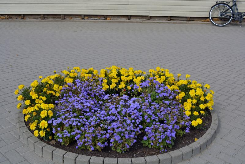 Parterre de cercle avec des fleurs sur le trottoir de ville images libres de droits
