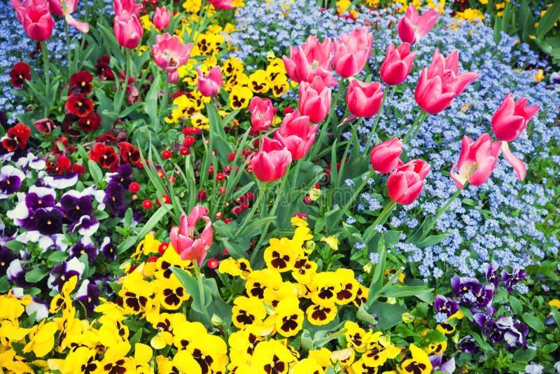 Parterre de jardin Photo de fond photographie stock libre de droits