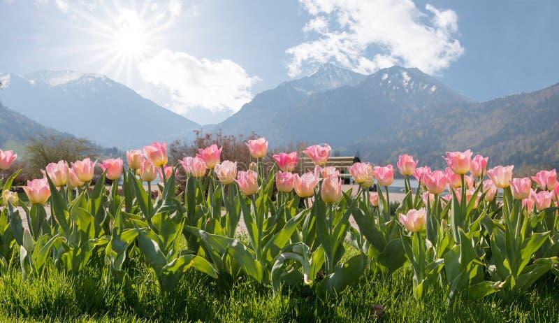 Parterre de tulipe au schliersee de jardin de station thermale photos stock