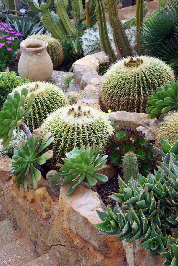 parterre du cactus image stock image du jardin composition 40239227. Black Bedroom Furniture Sets. Home Design Ideas